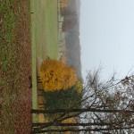 Garrison Forest Cemetery 15